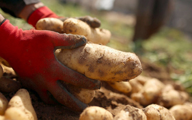 Штрафы дачников за посадку картошки, навоз и туалеты